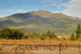 Mt Hood and turning vines