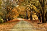 Tree tunnel Fall