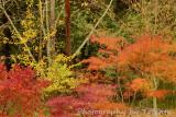Wildwood bright Fall colors
