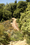 2014 Dirt Road thru trees