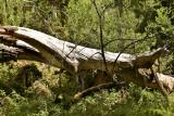 2014 Fallen Log