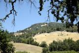 2014 Green brown hill