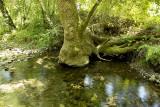 2014 Mossy tree trunk in pool