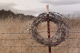 Faded Barbed Wire Wreath
