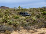 Rubicon in high desert Joshuas