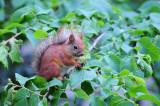 Squiller_candies2.jpg