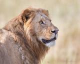 1DX_10031 - Lion