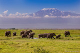 M4_10845 - Elephants in the foreground of Mt. Kilimanjaro