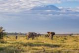 M4_10985 - Elephants and Mt. Kilimanjaro