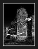 Ghostly gulls at the Castle