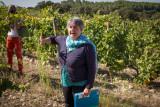 At Sylvia's Winery, Languedoc