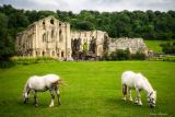 Ruined Abbeys of the North York Moors