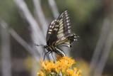 butterflies-2013