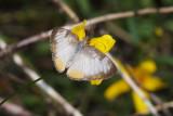 Butterflies: 2015