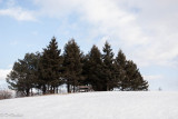 Huddling Wood Lot