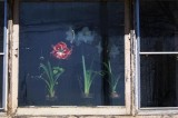 Lilies In the Window