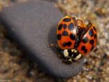 Ladybug on Beach