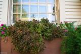 Window Planter in Bloom