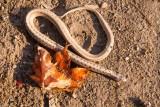 Snake in Autumn Sun