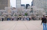 Weiwei in Nathan Phillips Square