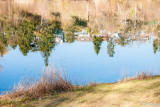 Reflections of Grenadier Pond