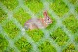 This little rabbit lives in the garden next door