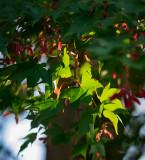 Hints of autumn