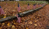 Veterans Day - The Fallen