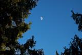 Moon from my backyard.