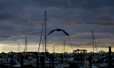 Marina, seagull and sunset
