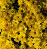 Flowers in November