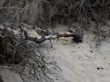 Fallen branch