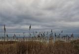 Sea, sky & reeds