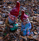 Gnomes in the woods