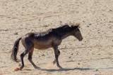 Garub Wild Horses