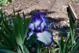 8280 Iris
