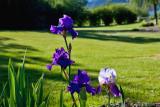 8304 Iris