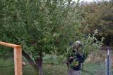 8413 Picking apples.jpg