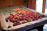 8417 Apples.jpg