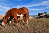 8427 Horses