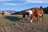 8428 Horses