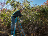 0864 Dave picking apples.jpg