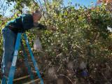 0865 Dave picking apples.jpg