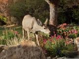 0885 Deer.jpg