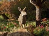 0887 Deer.jpg