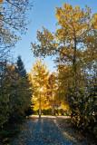 8485 Fall colors 2013.jpg