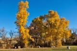 8488 Fall colors 2013- upper pasture