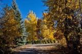 8495 Fall colors 2013.jpg