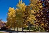 8496 Fall colors 2013.jpg