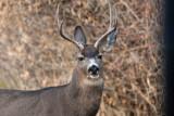 8621 Deer